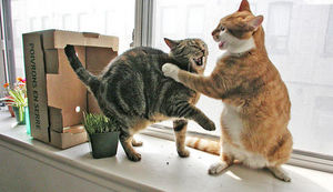 cat-fight.jpg